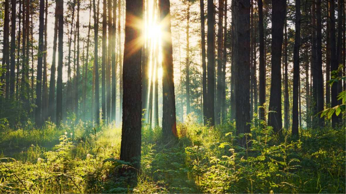 Environment image trees