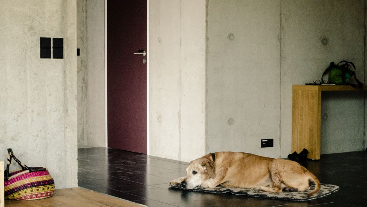 Türenprogramm Möbeltischlerei Marko Wust Hund liegt vor der Wohnungstür – Forbo Furniture Linoleum