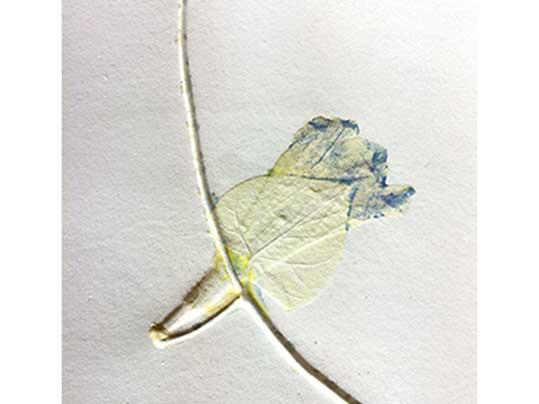00a-Thomas-Eijk-Alegria-van-der-Zandepressed-flowers