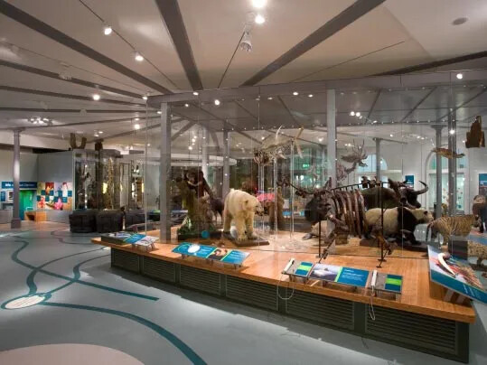 Marmoleum Leeds City Museum