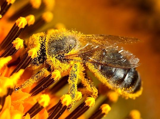 Forbo wspiera pszczelarzy