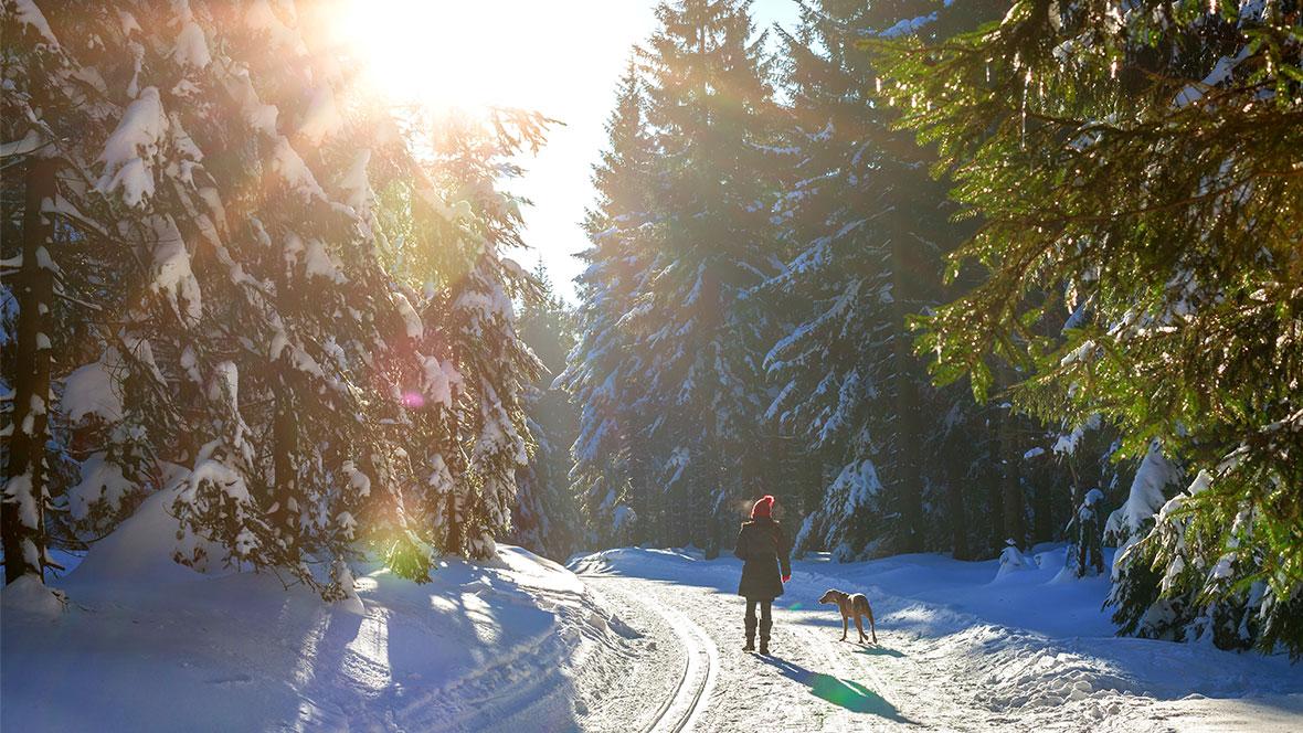 Newsletter - Winterspaziergang - Copyright Nordlichter AdobeStock