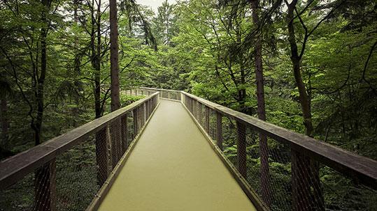 Forbo_Unser nachhaltige Weg_grün_Natur