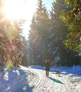 Winterspaziergang_Copyright-Nordreisender-AdobeStock
