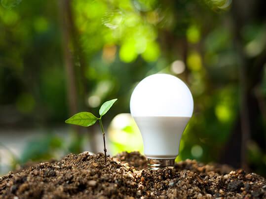 Förnybar energi – växt och glödlampa