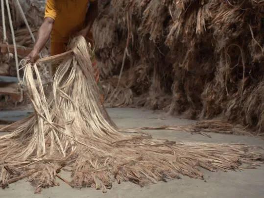 Making of Marmoleum | jute in Bangladesh